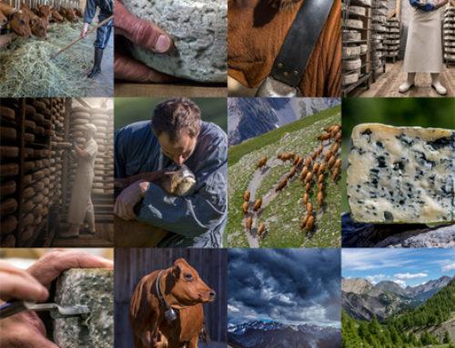 Bleu du Queyras, de l'estive à l'AOPBien produire, bien se nourrir, deux réponses à la crise écologique
