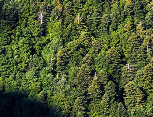 Le bois du Chapitre, Inscrit au patrimoine mondial de l'humanité